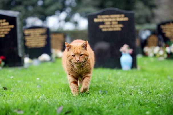 Mitos Seputar Hewan Yang Sering Dikaitkan Dengan kematian