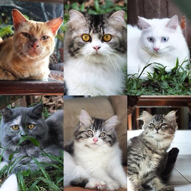 Kucing Peliharaan yang Lucu dan Menggemaskan